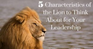 Leadership Qualities to Learn From a Lion